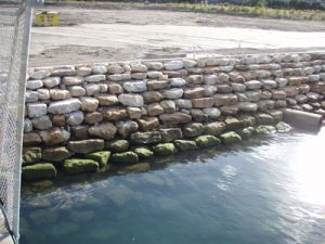 Example of ecologically engineered seawall